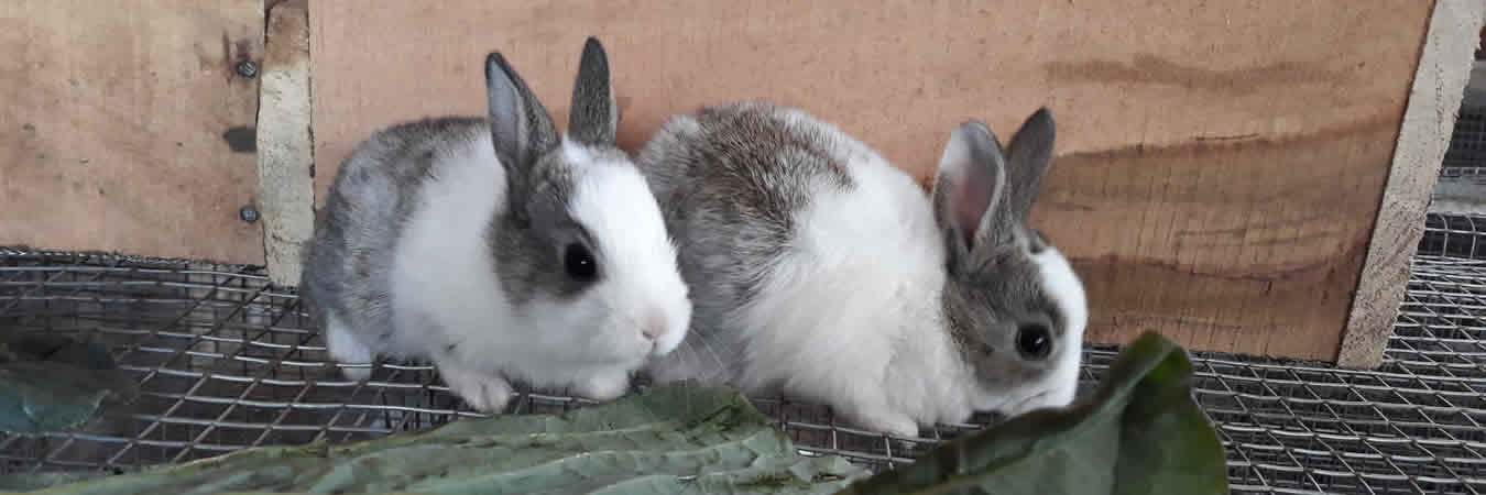 The Alrewas Show Rabbits page banner image
