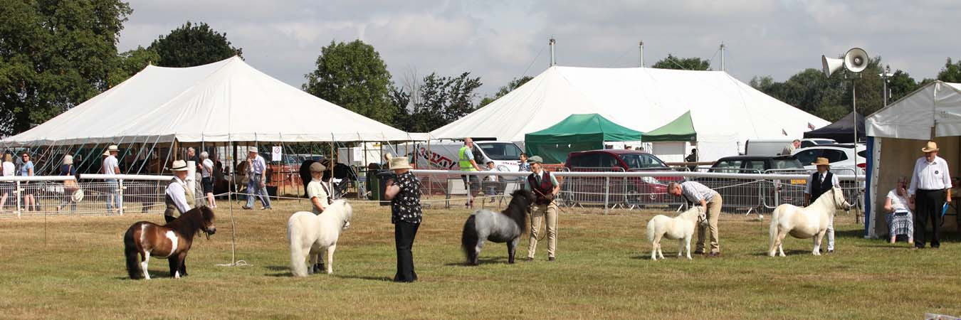 The Alrewas Show Shetland Ponies page banner image